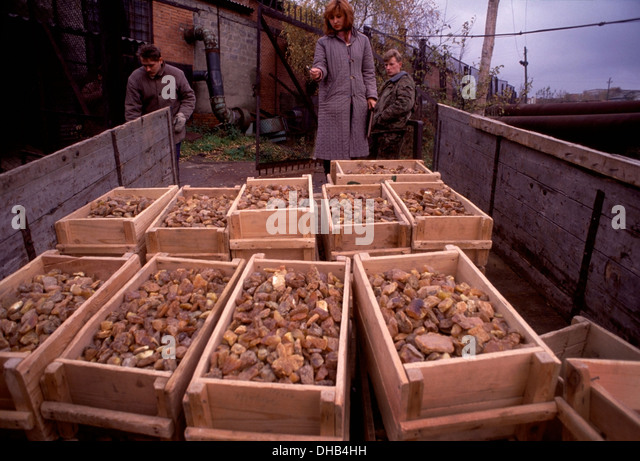 Supervisor counts crates of extracted amber nodules outside the spray house at the Palmnicken Amber Mine in Yanrarny, - Stock Image