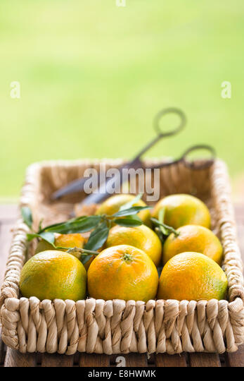 garden table with clementines in basket with vintage scissors - Stock-Bilder