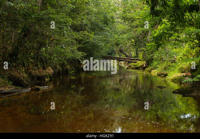A calm dark water creek running through the Amazon Rainforest north of Manaus - Stock Image