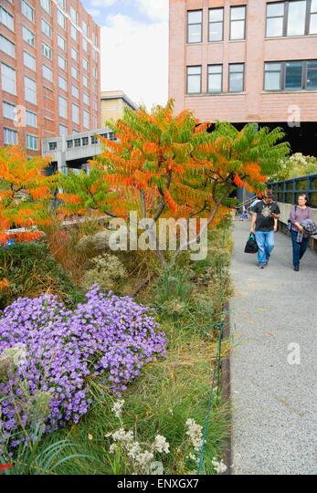 Usa New York Manhattan People Walking Along Path Beside Plants In Palestinian Liberty Leading