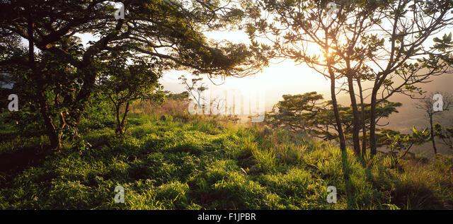Misty Landscape Zimbabwe, Africa - Stock Image