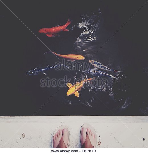 Fishes Swimming In Pond - Stock Image