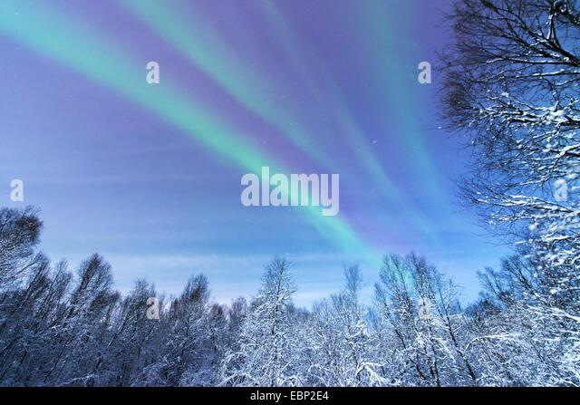 aurora above snowy forest scenery, Norway, Troms, Tromsoe - Stock Image