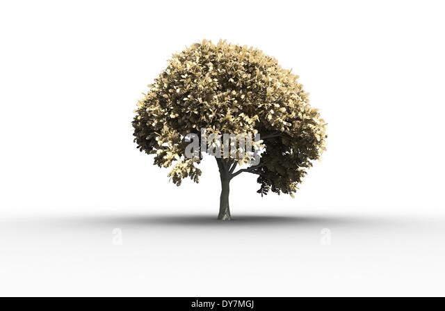 Tree with lots of leaves growing - Stock Image