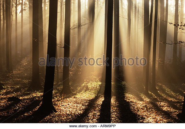 Foggy forest and sunrays, Bayerischer Wald, Germany, Europe - Stock Image