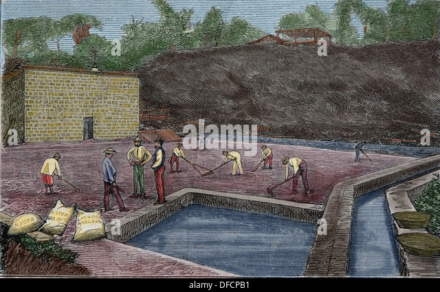 Coffee production. Traditional coffee drying. Plantation of Guatemala. Colored engraving. - Stock Image