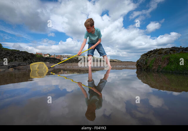 A child with a fishing net looking for fish in a rock pool at Robin Hood's Bay beach in Yorkshire, UK - Stock Image