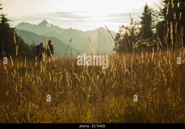 Austria, Tyrol, Tannheimer Tal, tall grass in sunlight on alpine meadow - Stock Image