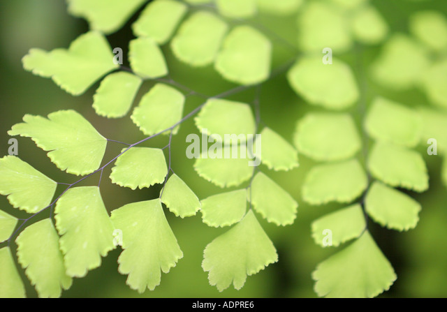 Florida, tropical plant, flora, growing, life, green leaves, - Stock Image