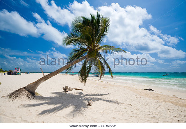 Palm tree on the beach at Tulum, Quintana Roo, Yucatan Peninsula, Mexico. - Stock Image