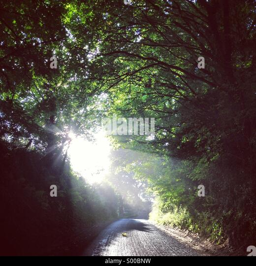 Country lane, Wiltshire, England. Late Summer 2013. - Stock Image