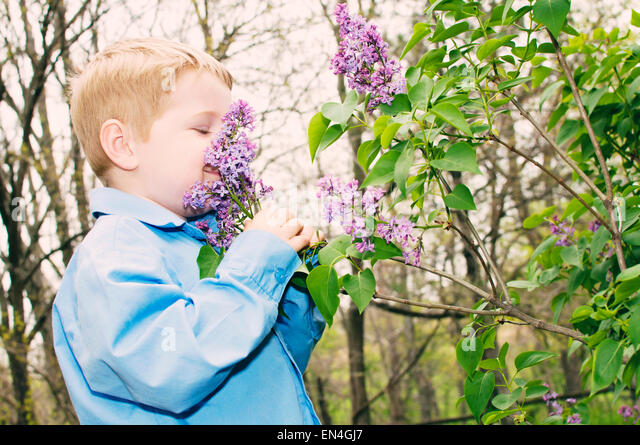 boy smelling lilac flowers on bush - Stock Image