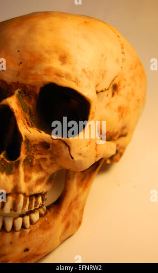 Decay - Stock Image