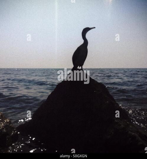 Seabird on a rock. El Maresme coast near Barcelona, Catalonia - Stock Image