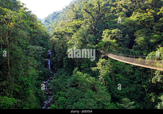 Canopy Tree Trek, Scenery with Forest and Waterfall. Boquete, Panama - Stock Image