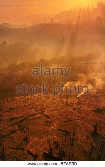 Burned landscape after forest fire (aerial), Big Sur, California - Stock Image