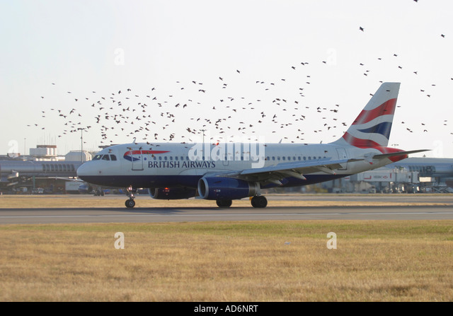 British Airways passenger airplane and flock of birds flying close - Stock Image
