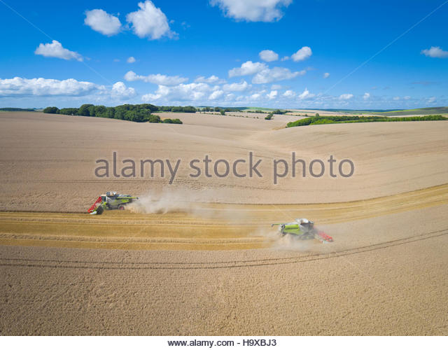 Aerial View Of Two Combine Harvesters Harvesting Wheat Crop - Stock Image