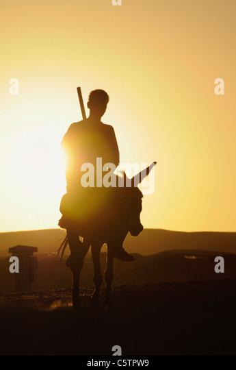 Egypt, Man sitting on donkey at sunset - Stock Image