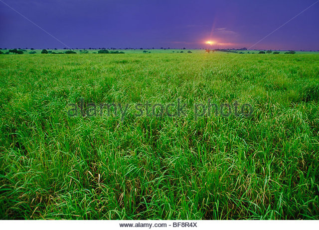 Savanna sunset, Garamba National Park, Democractic Republic of Congo - Stock-Bilder