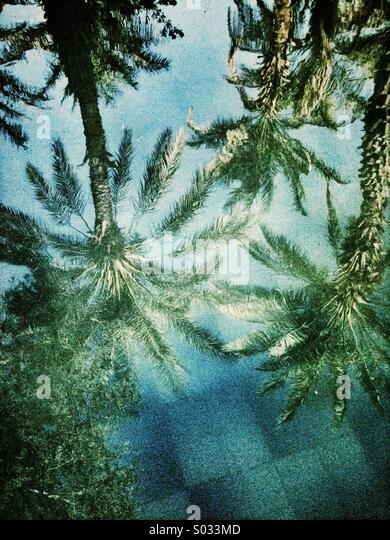 Palm trees reflecting in a tropical pool. - Stock Image