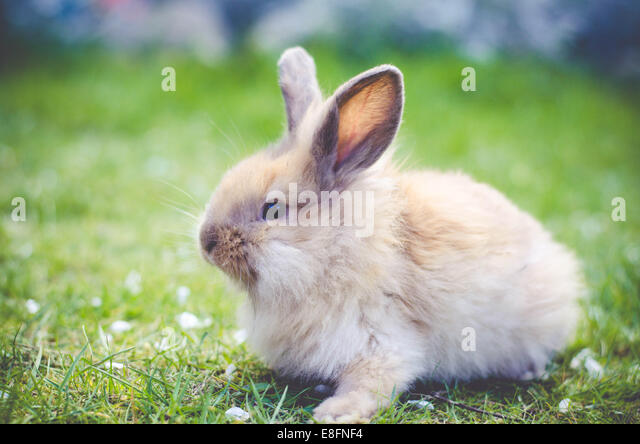 Rabbit sitting on grass - Stock Image