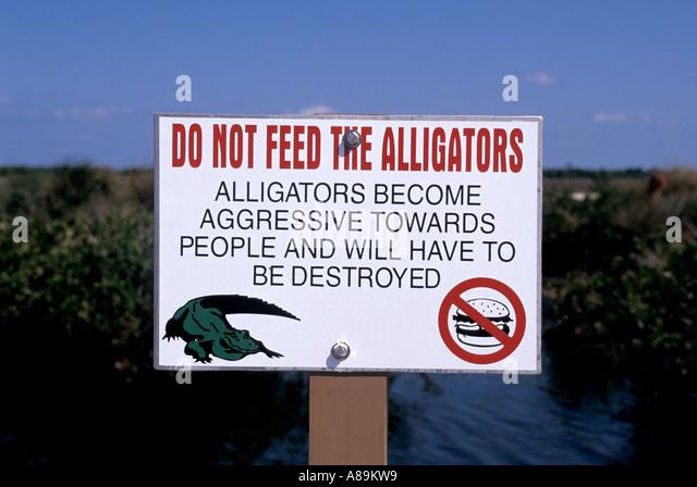 Florida fl nature wildlife warning sign do not feed alligators - Stock Image