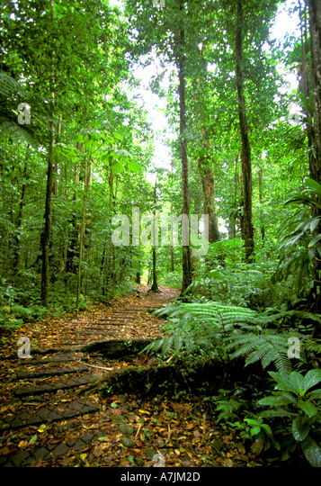 Dominica West Indies Caribbean Hiking Syndicate Trail Pathway - Stock Image