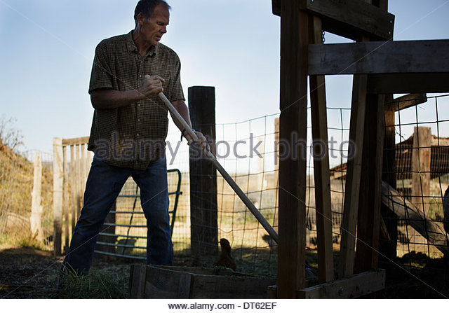 Mature man working on farm - Stock Image