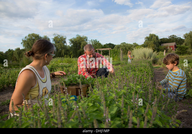 Family working together on herb farm - Stock-Bilder