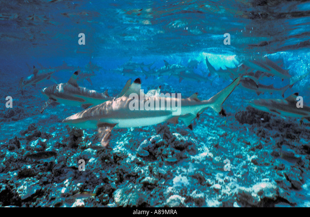 Underwater Shark Feeding Frenzy - Stock Image
