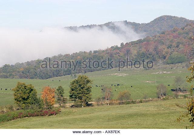 West Virginia farmland trees fall colors morning fog - Stock Image
