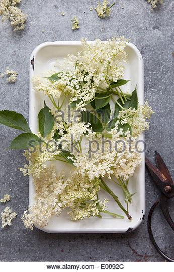 Directly below shot of elderflower on tray - Stock Image