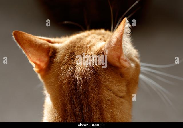 Tabby Cat Head Markings Back View