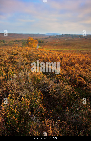 Autumn colours at Rockford Common in the New Forest National Park, Hampshire - Stock Image