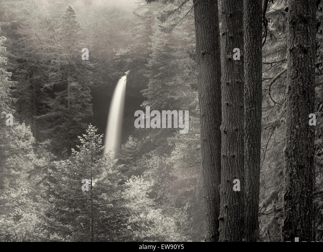 North Falls with fog and fall color. Silver Falls State Park, Oregon - Stock Image