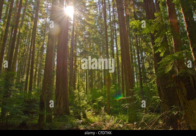 Sun peaks lush green rainforest near Shelter - Stock Image