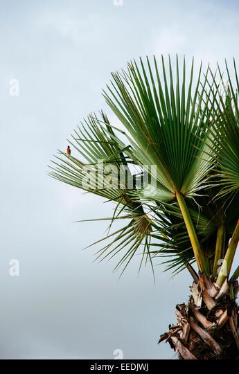 A bird sits on a palm leaf, Senegal - Stock Image