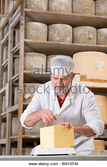 Cheese maker cutting farmhouse cheddar with cheese wire in cellar - Stock Image