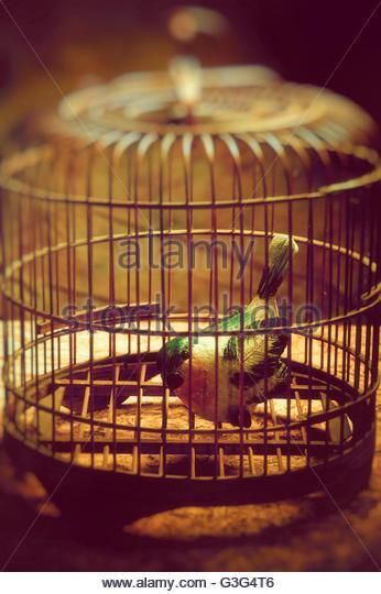 fake bird into a retro birdcage - Stock-Bilder