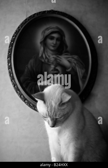 Madonna with cat - Stock Image