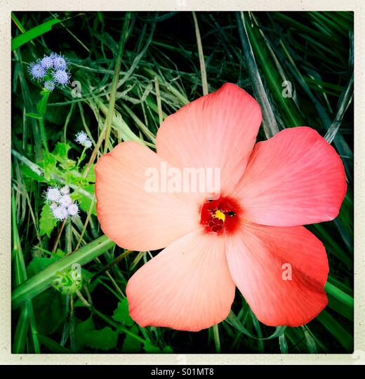 Bush land flower - Stock Image