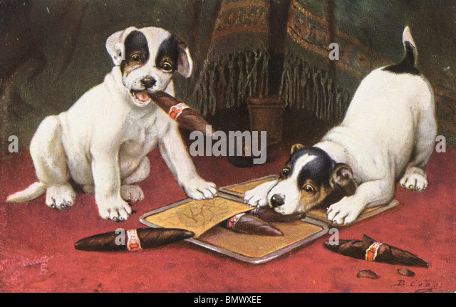 Dogs enjoying a Cigar! - Stock Image