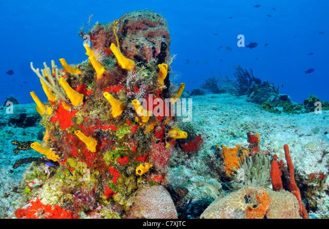 Caribbean Coral Reef, Cozumel, Caribbean Sea, Mexico - Stock Image