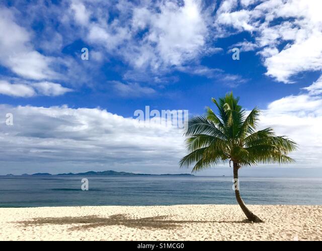 A palm tree on the beach. Tavarua Island, Fiji. - Stock Image