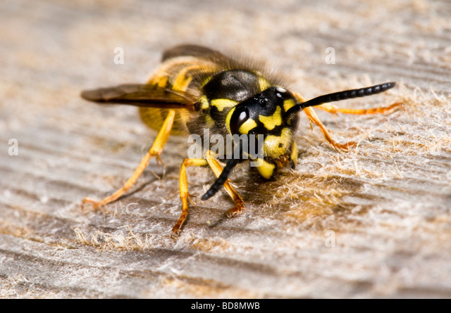 how to keep wasps from making nests