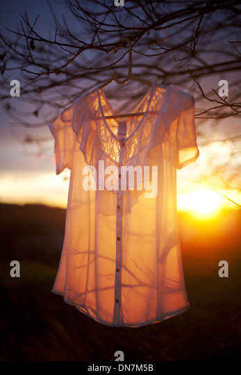 Blouse hanging on the tree in backlight - Stock Image