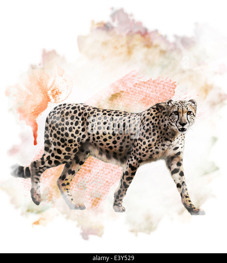 Watercolor Digital Painting Of Walking Cheetah - Stock-Bilder
