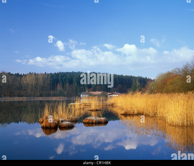 Harmatinger Weiher, pond, Egling, Toelzer Land, Upper Bavaria, Bavaria, Germany, Europe - Stock Image