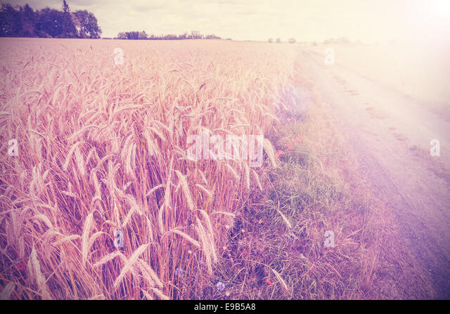 Vintage photo of side road through field at sunset. - Stock Image